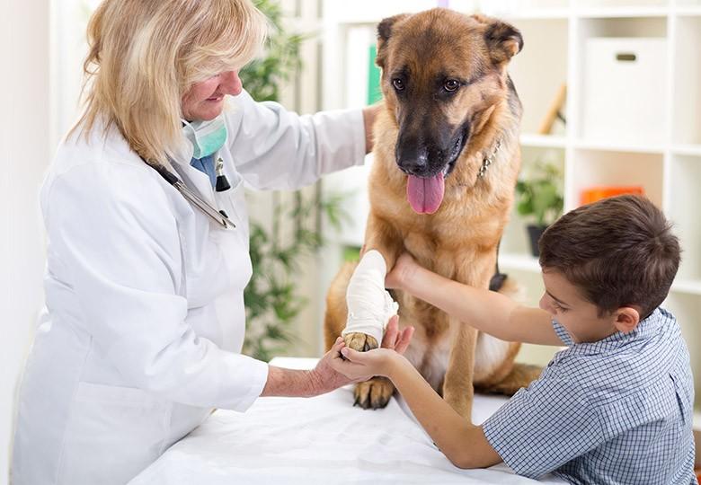 Emergency Pet Services